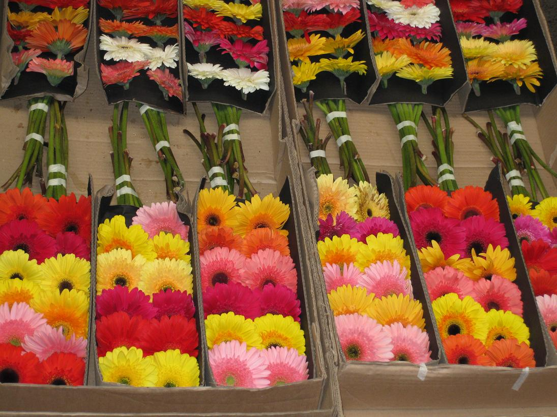 The boxes of brightly colored gerberas were some of my favorites